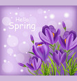 crocus ultra violet flowers bouquet spring vector image vector image
