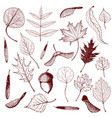 big collection engraved forest leaves and vector image vector image