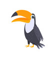 black toucan standing with big beak isolated on vector image