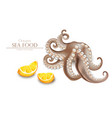 octopus realistic isolated on white 3d vector image vector image