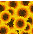 orange yellow sunflower seamless background vector image