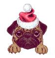 sketch of cute pug puppy with santa hat vector image