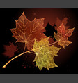 Branch with maple leaves on dark background