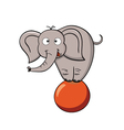 Cartoon elephant on a ball vector image vector image