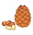 cedar nut icon cartoon style vector image