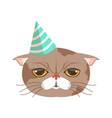 cute cat party hat funny cartoon animal character vector image vector image