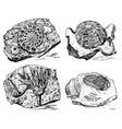 fragment fossils skeleton prehistoric dead vector image