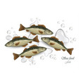 mackerel seafood fish vector image