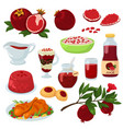 pomegranate healthy food red ripe fruit vector image
