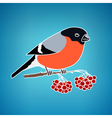 Colorful Bullfinch on a Blue Background vector image vector image