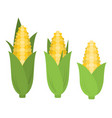 corn in flat style vector image