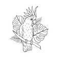 hand drawn cockatoo parrot with palm leaves vector image