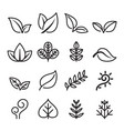 leaf vegetarian herb icon set in thin line style vector image vector image