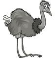nandu ostrich bird cartoon vector image vector image
