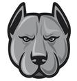 pit bull head - pit bull terrier vector image