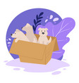 puppies in carton box shelter for animals vector image vector image