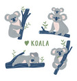 hand drawn doodle koala bears collection cute vector image vector image