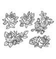 sketches rose bouquet or hand drawn flowers vector image