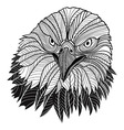 Bird bald eagle head vector image