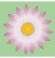 Pink daisy vector image vector image
