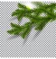 Two green realistic shadows with spruce branches vector image vector image