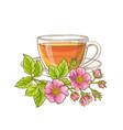dog rose tea vector image