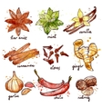 Herbs And Spices Icons Set vector image