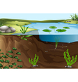 A pond ecosystem vector image vector image