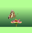 butterfly on top side and eating nectar from f vector image vector image