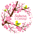 Cherry Blossoms or Sakura flowers with Bird vector image