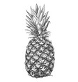 fruit pineapple hand drawn vector image vector image