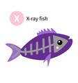letter x x-ray fish zoo animal alphabet english vector image vector image