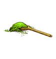 matcha green tea organic powder and spoon vector image vector image