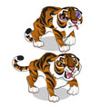 aggressive tiger and tiger with a bruise vector image vector image