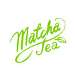 calligraphic lettering matcha green tea vector image vector image