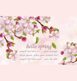 cherry flowers spring background pink vector image