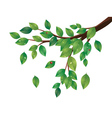 Green Leaves Tree Branch2 vector image