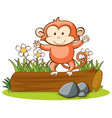 isolated picture cute monkey vector image vector image