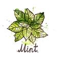Sketch Mint Leaf vector image
