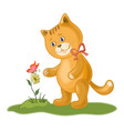 cat flower and butterfly vector image vector image