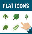 flat icon nature set of tree leaves alder and vector image vector image