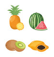 group tropical and fresh fruits vector image