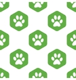 Paw pattern vector image