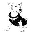 White dog is wearing the black shirt He is sitting vector image