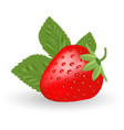 strawberry sweet fruit isolated on a white vector image vector image