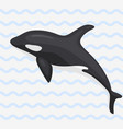 whale marine mammal north vector image