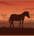 zebra silhouette on twilight vector image vector image