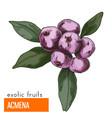 acmena color vector image vector image