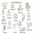 antispasmodic herbs hand drawn set of medicinal vector image