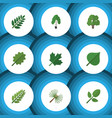 flat icon nature set of timber leaves alder and vector image vector image